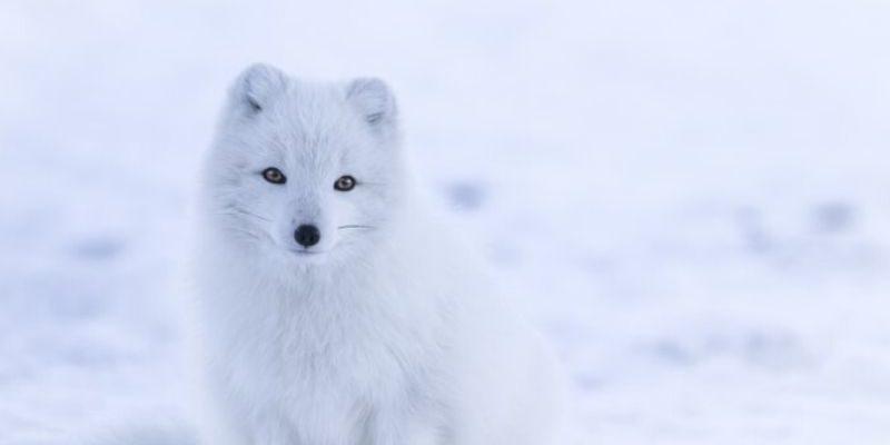 Non SCIvolare sulla neve se non hai pensato agli occhi